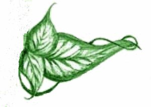 leaf_from_logo copy